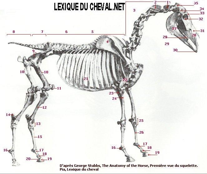 C2 spine anatomy
