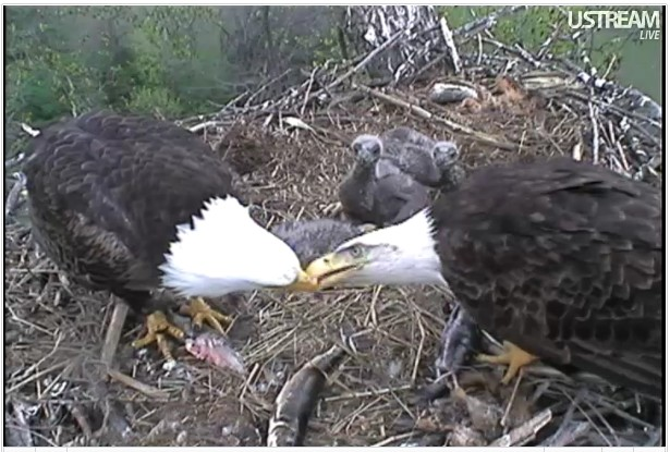 Eagles on live !!! - Page 3 2012_4_15__3